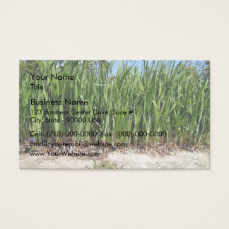Natural Hedge with Dark Green Leaves Business Card