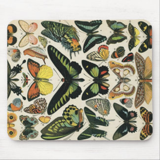 Natural History Butterfly Mouse Pad