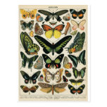 Natural History Butterfly Tarjeta Postal