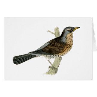 Natural History Watercolor Bird Notecard