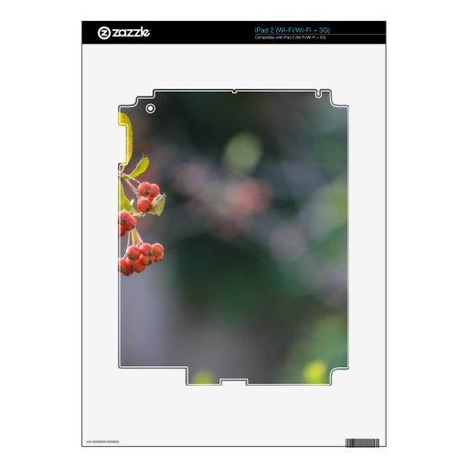 Natural iPad 2 Calcomanías