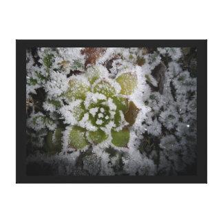 natural landscape winter frosts freezing freezes canvas print