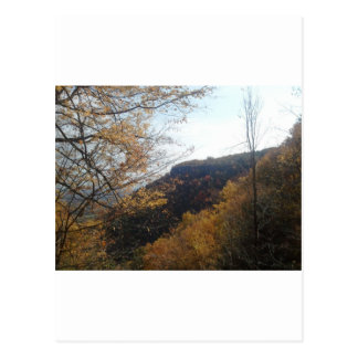 Natural Layout Postcard