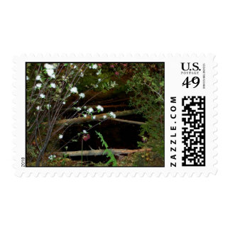 Natural Reflections - Stamps