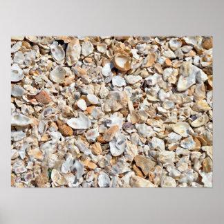 Natural Sea Shells Texture Poster