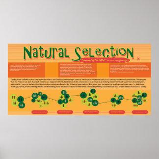 Natural Selection Poster