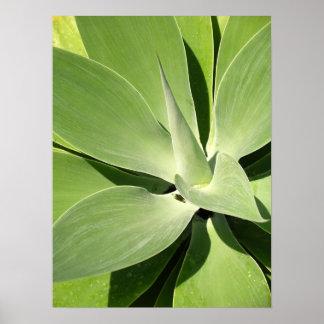 Natural Shades of Green Poster