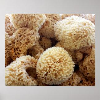 Natural Sponges Poster