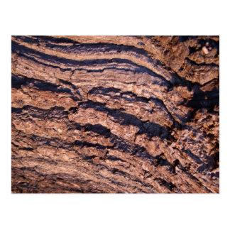 Natural Tree bark texture Postcard