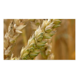 Natural Wheat Spike Business Card Template