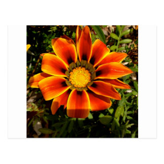 Natural wonders Delicate Flower Postcard