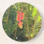 Natural wonders Hawaiian style lobster claw Drink Coaster