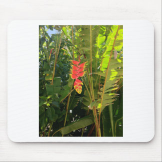 Natural wonders Hawaiian style lobster claw Mouse Pad
