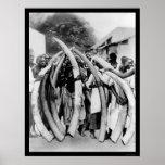 Naturales con los colmillos de marfil en Dar es Sa Póster