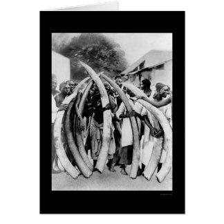 Naturales con los colmillos de marfil en Dar es Tarjeta De Felicitación