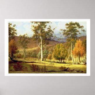 Naturales en el bosque en los llanos de los molino póster