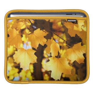 naturaleza amarilla de las hojas de otoño de los r manga de iPad