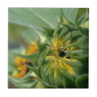 Naturaleza amarilla del despliegue del girasol teja cerámica