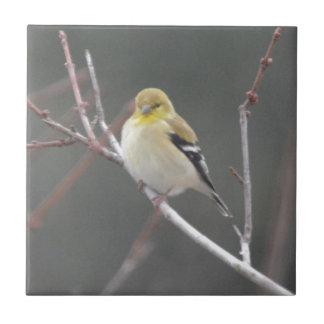Naturaleza americana del Goldfinch del pájaro Azulejo Cuadrado Pequeño