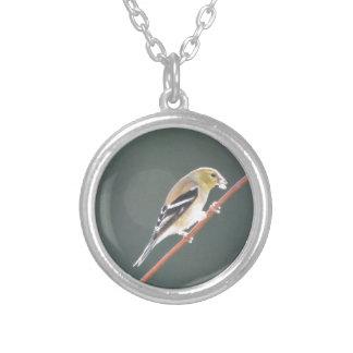 Naturaleza americana del Goldfinch del pájaro Joyerias