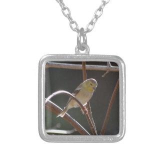 Naturaleza americana del Goldfinch del pájaro Pendientes