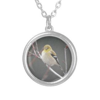 Naturaleza americana del Goldfinch del pájaro Collares