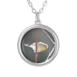 Naturaleza americana del Goldfinch del pájaro Grimpola