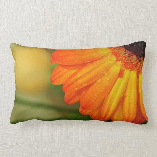 naturaleza anaranjada de la flor del descenso del  almohadas