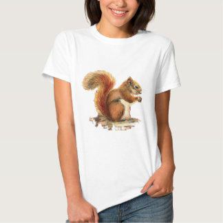 Naturaleza animal linda de la ardilla roja de la camisas