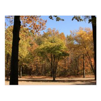 Naturaleza, árboles, elementos, al aire libre, via postal