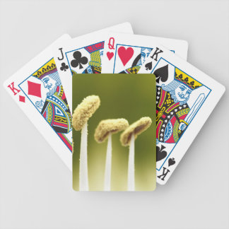 Naturaleza Baraja Cartas De Poker