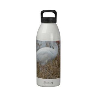 Naturaleza blanca de Ibis del pájaro Botella De Beber