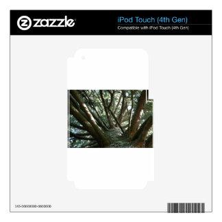 Naturaleza de Braches del árbol Calcomanías Para iPod Touch 4G
