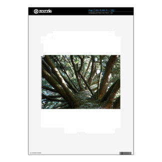 Naturaleza de Braches del árbol Skin Para El iPad 2
