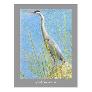 Naturaleza de la bella arte de la garza de gran tarjeta postal