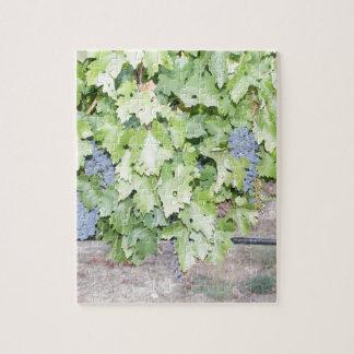 Naturaleza de la vid de uva y fotografía del rompecabezas con fotos