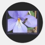 Naturaleza de la violeta de la serradella del amor pegatina