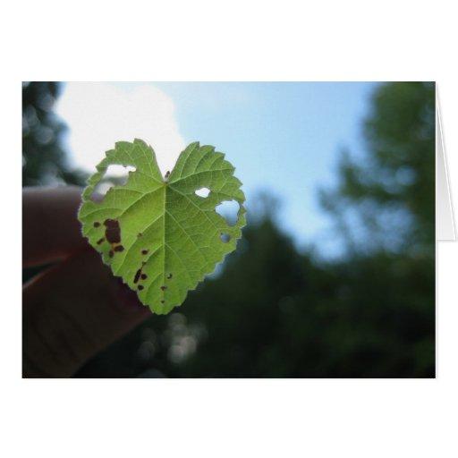 Naturaleza del amor tarjetas