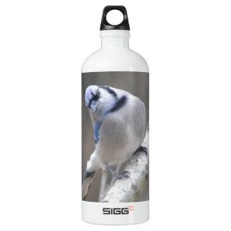 Naturaleza del arrendajo azul del pájaro
