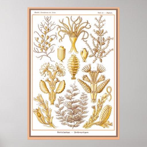 Naturaleza del der de Ernst Haeckel - de Kuntsform Póster