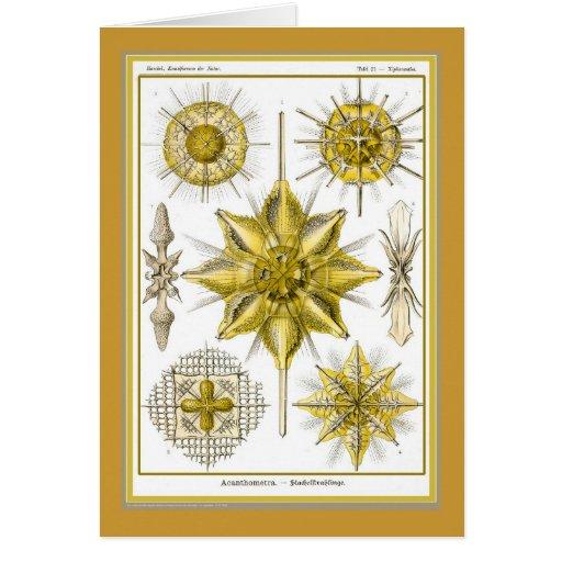 Naturaleza del der de Ernst Haeckel - de Tarjeta De Felicitación