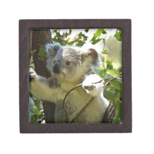 Naturaleza del destino de Aussi de los osos de koa Caja De Recuerdo De Calidad