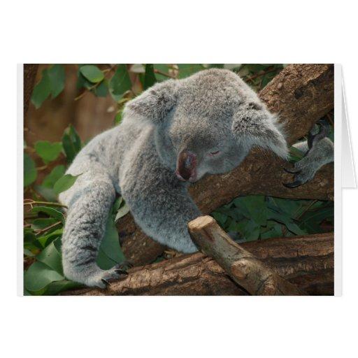 Naturaleza del destino de Aussi de los osos de koa Tarjeton