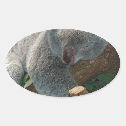 Naturaleza del destino de Aussi de los osos de Pegatina Oval