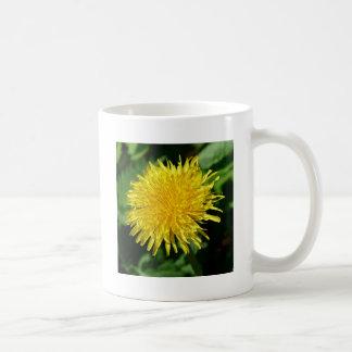 Naturaleza del diente de león, foto taza de café