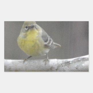Naturaleza del pájaro de la curruca del pino pegatina rectangular