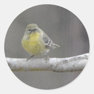 Naturaleza del pájaro de la curruca del pino pegatina redonda