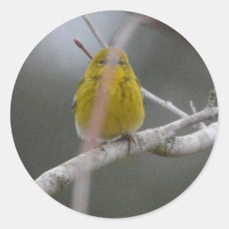 Naturaleza del pájaro de la curruca del pino que pegatina redonda