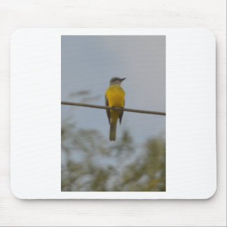 Naturaleza del pájaro del Kingbird del sofá Tapetes De Ratones