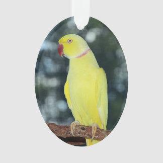 Naturaleza del Parakeet de Ringneck del indio de
